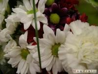 kwiat_113