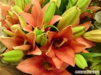 kwiat_115