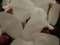 kwiat_121