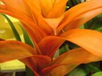 kwiat_123