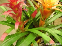 kwiat_125