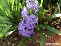 kwiat_127