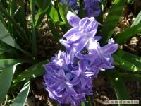 kwiat_128