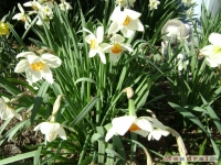 kwiat_132