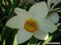 kwiat_134