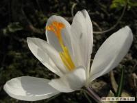 kwiat_141