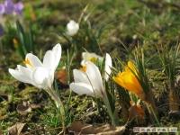 kwiat_146