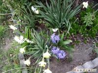 kwiat_149