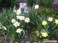 kwiat_150