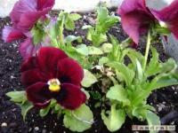 kwiat_152