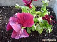 kwiat_153