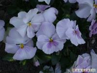 kwiat_161