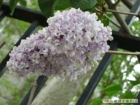 kwiat_162