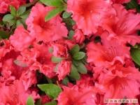 kwiat_164