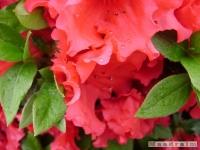 kwiat_165