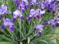 kwiat_166