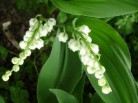 kwiat_171