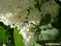 kwiat_172