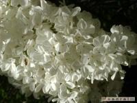 kwiat_174