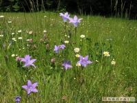 kwiat_258