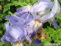 kwiat_262