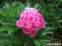 kwiat_269