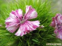 kwiat_272