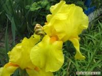 kwiat_274