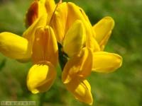 kwiat_284