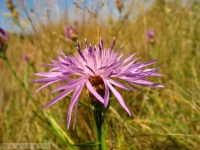 kwiat_289