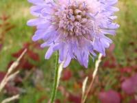 kwiat_295