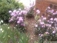 kwiat_297