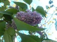 kwiat_302