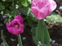 kwiat_306