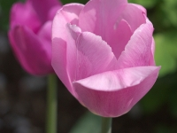 kwiat_309