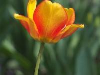 kwiat_310
