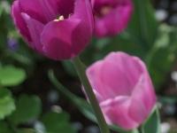 kwiat_311
