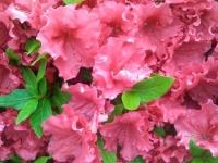kwiat_314