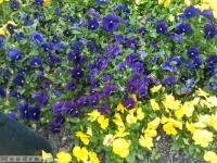 kwiat_317