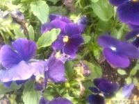 kwiat_319