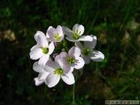 kwiat_325
