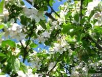 kwiat_327