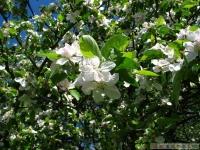 kwiat_329