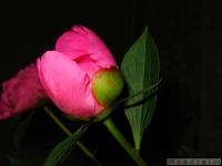 kwiat_332