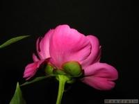 kwiat_333