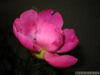 kwiat_336