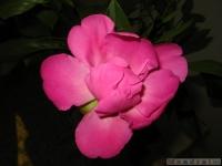 kwiat_337