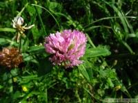 kwiat_338