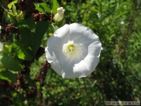 kwiat_339