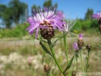 kwiat_340